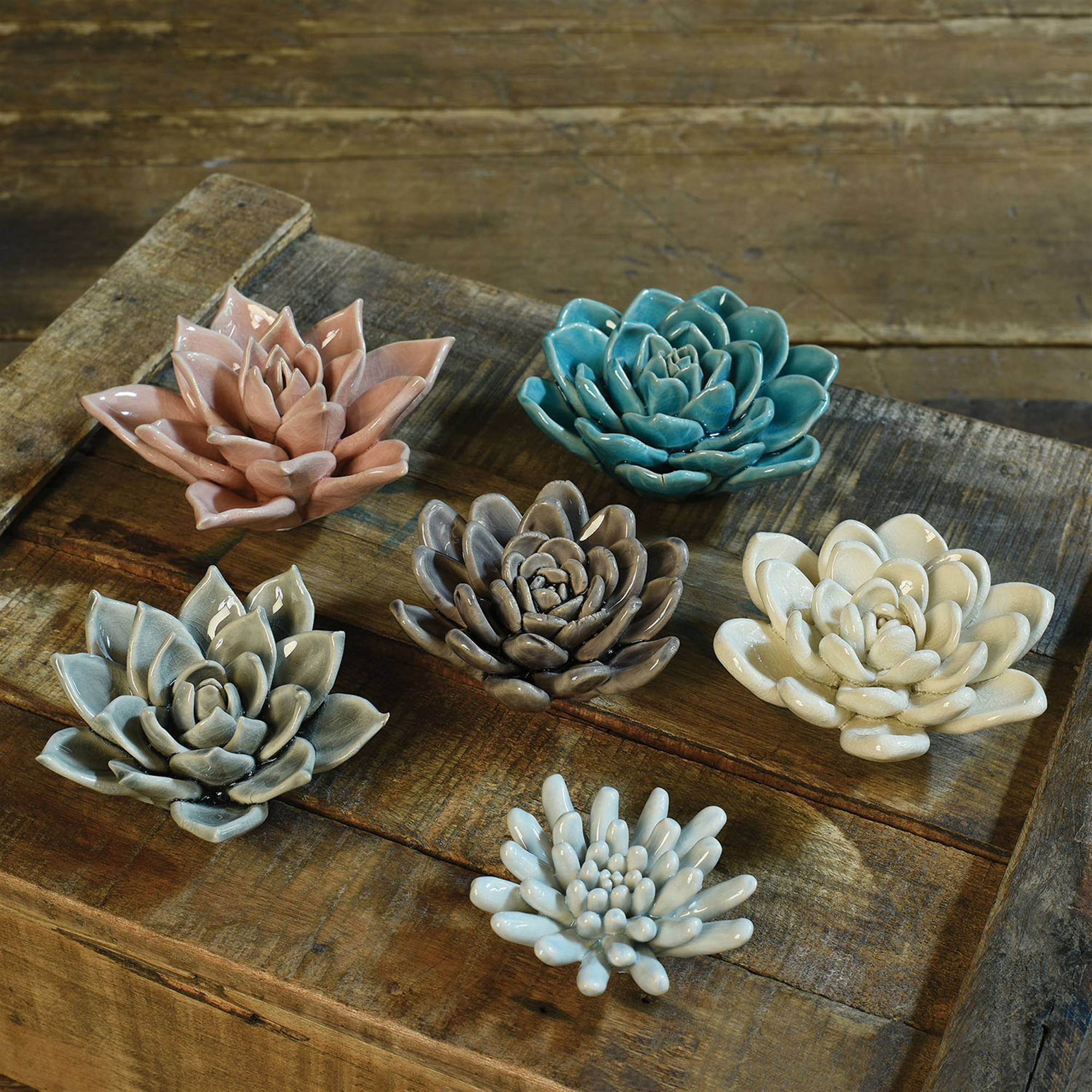 Cream Ceramic Succulent By Homart Seven Colonial